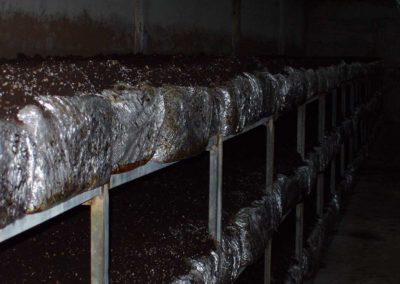 Paquetes de compost de champiñón, con la tierra de cobertura